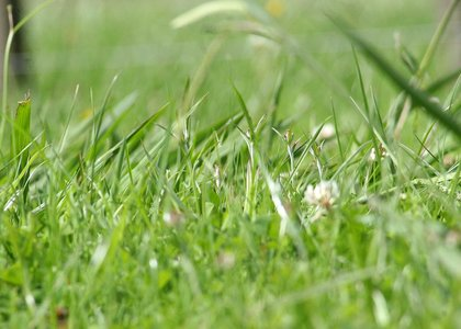 Close-up of green grass growing in a field
