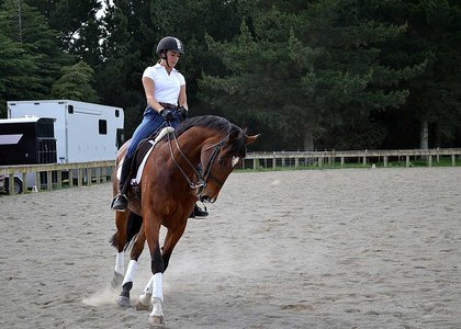 Adult rider on bay horse performing dressage in an outdoor arena